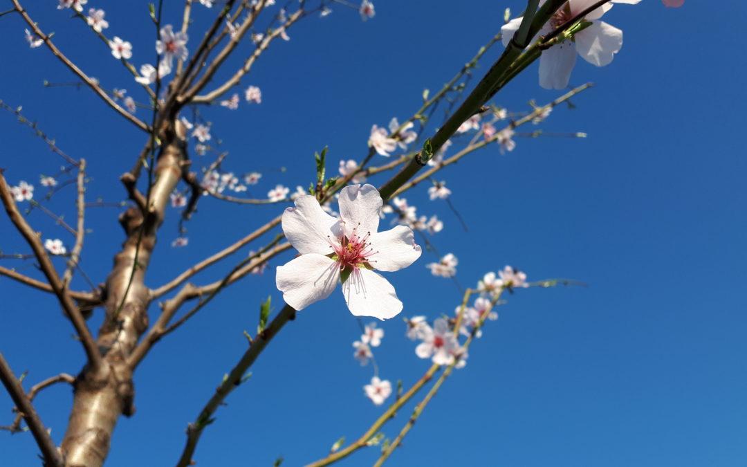 """""""In der Einfachheit und Stille der Natur findet der Mensch die Lebenskraft."""""""